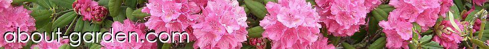 About-garden.com
