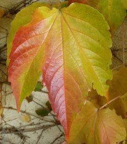 Jagged - Autumn Fall