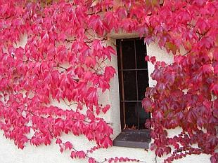 Cz říjen v zahradě cz říjen kakost červené vybarvení listů