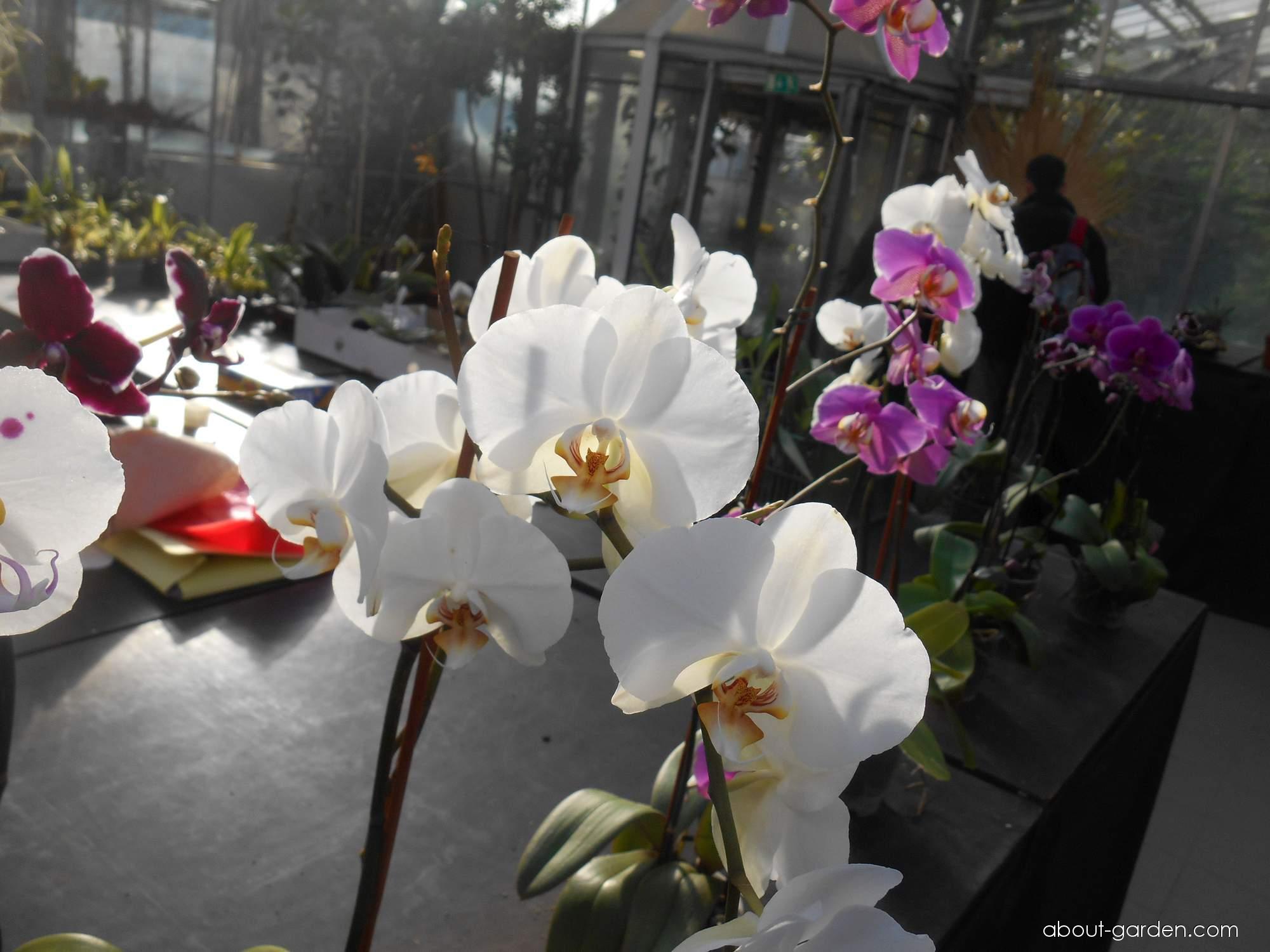 Orchideje (Orchidaceae)
