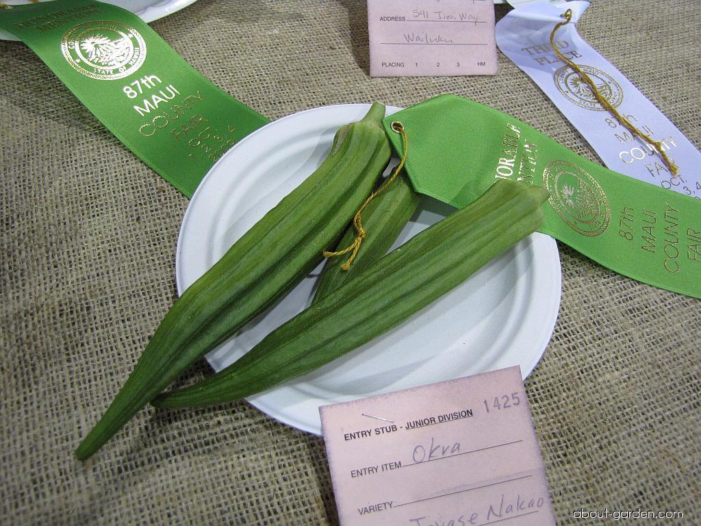 Gumbo (Abelmoschus esculentus)